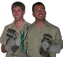 Denver Wildlife Control Business Rat Bat Bird Raccoon